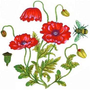 http://www.artystick.net/13-thickbox_default/botanicals.jpg