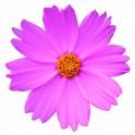 BEAUTIFUL FLOWERS 2 90 x 90 mm
